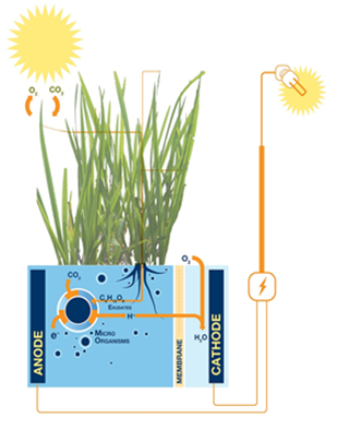 Inventions Thomas Edison Would Love: Green Grass, Green Electricity